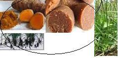 jamu herbal sakit perut : biang kunyit dan rumput teki